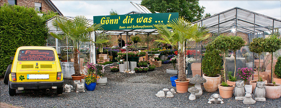 Blumen Dimmerling in Heinsberg